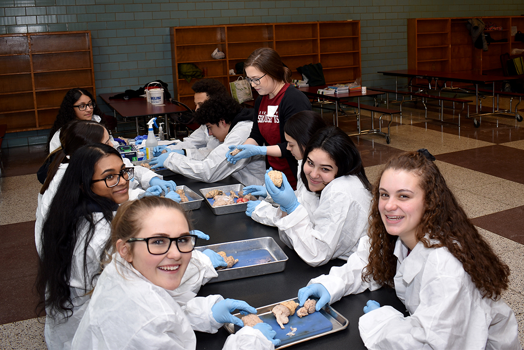 high school students in lab coats touch sheep brains