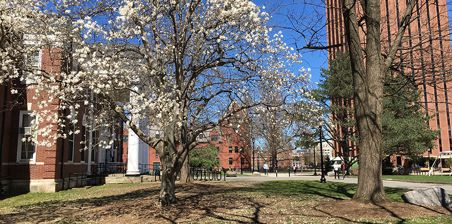 spring blossoms at south college